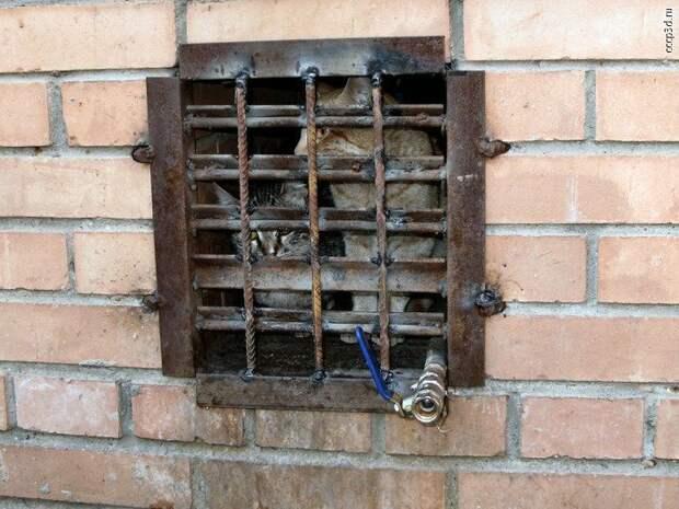 Минстрой за котиков! котики, минстрой, подвалы, пусть гуляют