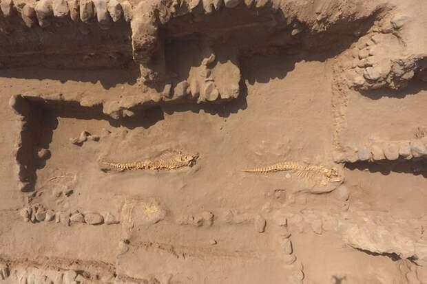 В Перу под древними пирамидами археологи нашли захоронения китов