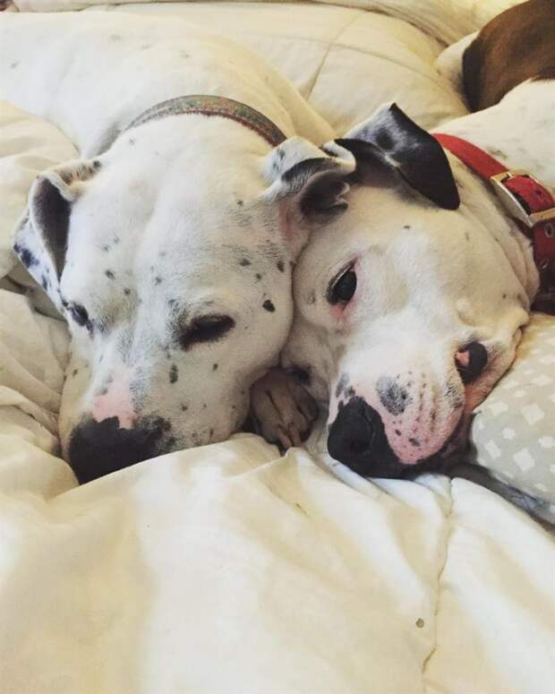Без своей возлюбленной, пес не хотел покидать приют