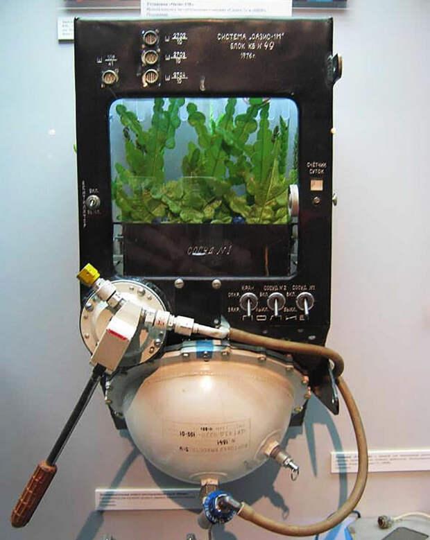 В России придумали новый способ выращивания овощей в космосе