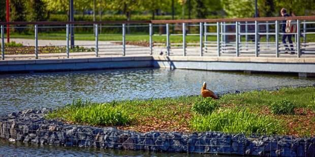 Благоустройство Лазоревых прудов планируют завершить до конца года