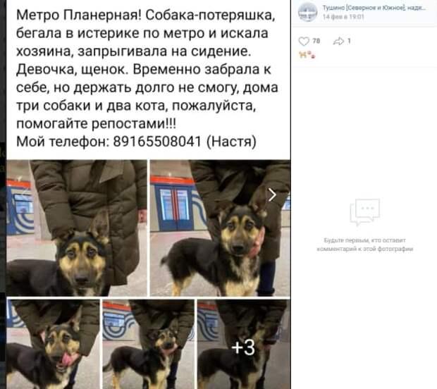 На станции метро «Планерная» потерялся щенок овчарки