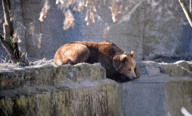 Вваршавском зоопарке пьяный мужчина пытался утопить медведя