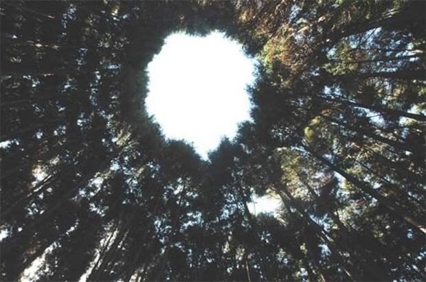 """Японский эксперимент - """"круги на полях"""" Япония, Лес, Эксперимент, Длиннопост"""