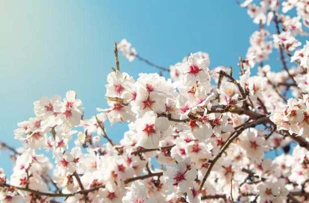 5 болезней, которых надо опасаться в апреле