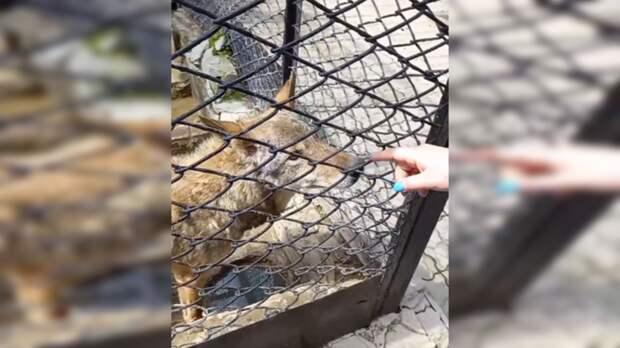 Посетителей зоопарка в Ростовской области возмутило жестокое отношение к животным