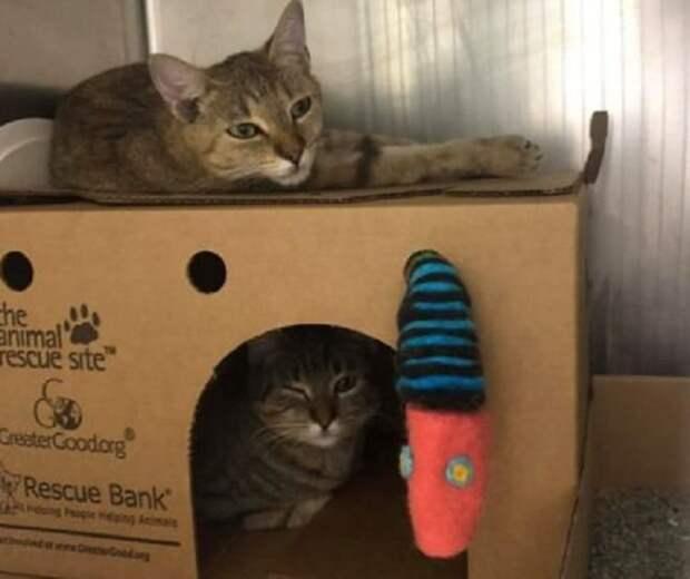 Коты и коробка