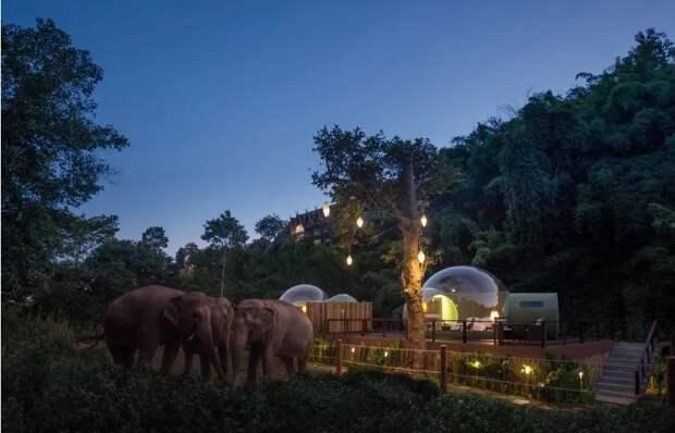 3 крутых фото прозрачного отеля посреди заповедника со слонами