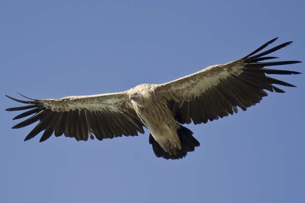 Прекрасные и опасные. 25 хищных птиц ч.1