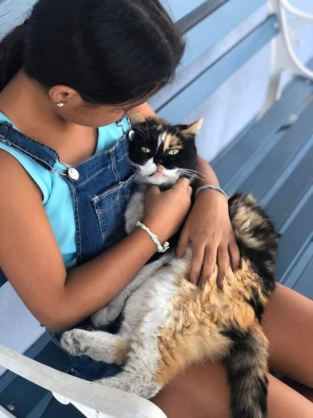 Кошка считает себя владычицей мира, а потому ложится спать, где захочет и с места ее не сдвинуть