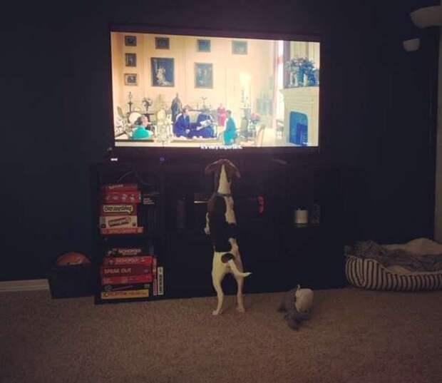 Да это же «Король Лев»! Собака смотрит фильм, переживает за героев и пытается «успокоить» маленького Симбу