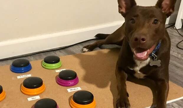 Говорящая собака Стелла: все понимает, атеперь исказать может