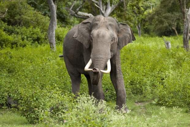 Воришка возвращается: в Таиланде голодный слон вломился в очередной дом, но уже ради кошачьего корма