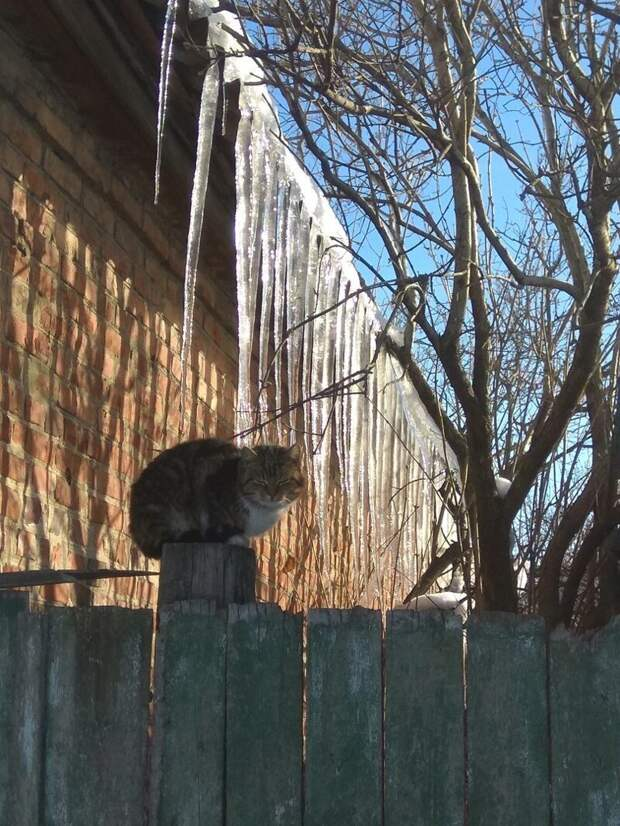 Главное, чтобы сосулькой не зашибло город, домашние животные, забор, кот, кошка, село, улица, эстетика