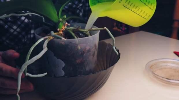 Эта лучшая подкормка для орхидей есть у каждой хозяйки на кухне