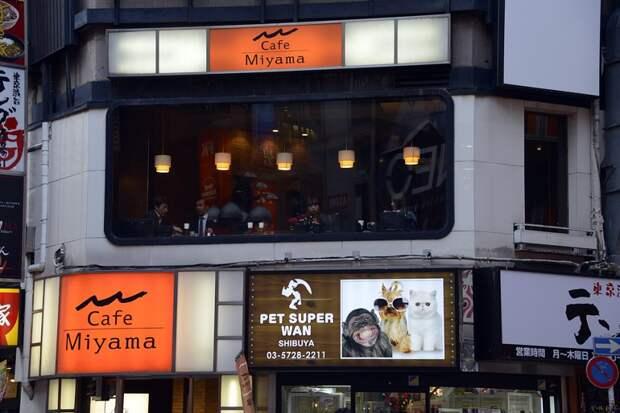Japan.Tokio12 Япония: Токио