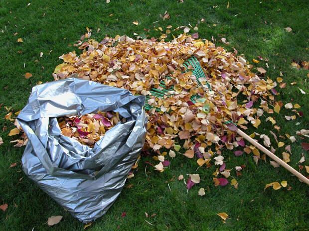 Самый полезный компост из опавшей листвы. Хитрости приготовления