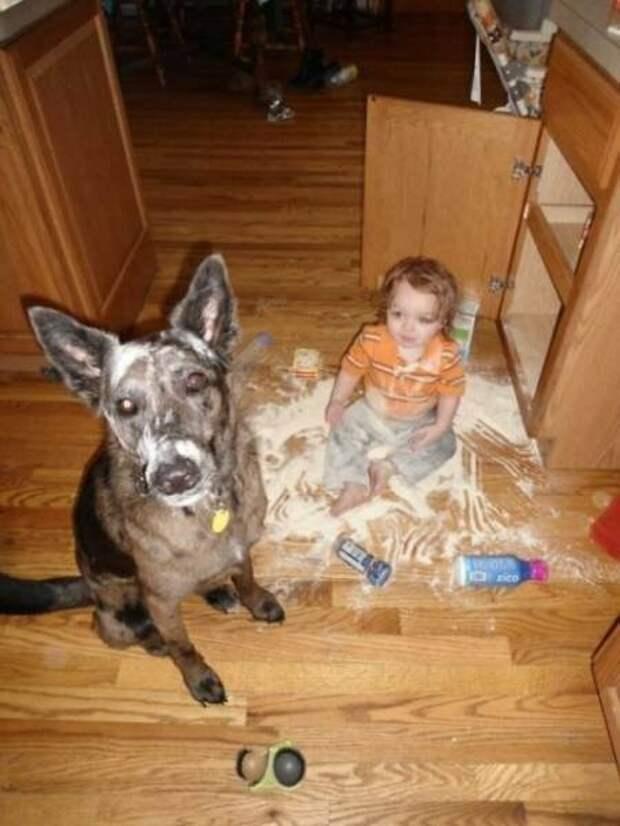 Собаки и дети — лучшие друзья навеки! дети, животные, собаки