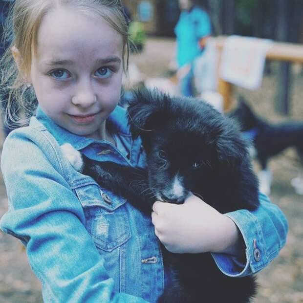 За двумя маленькими щеночками с отравой охотились жители деревни приют, собака, черный щенок, щенок