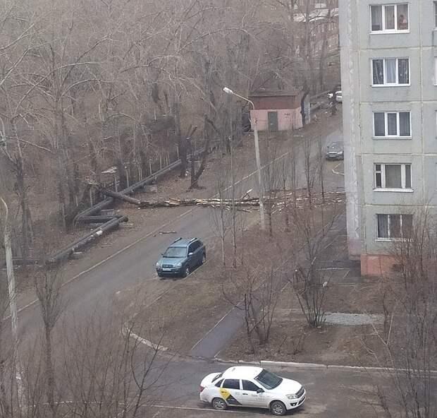 Ветер легко валил огромные деревья. Фото: ВКонтакте