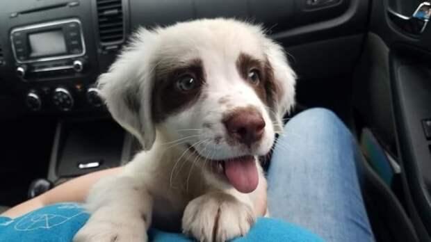 Собака-улыбака друзья человека, животные, мило, очаровательно, собаки, собачья жизнь, фото, фотографии