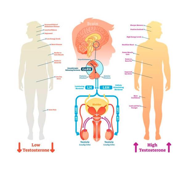 Тестостерон: симптомы дефицита главного мужского гормона