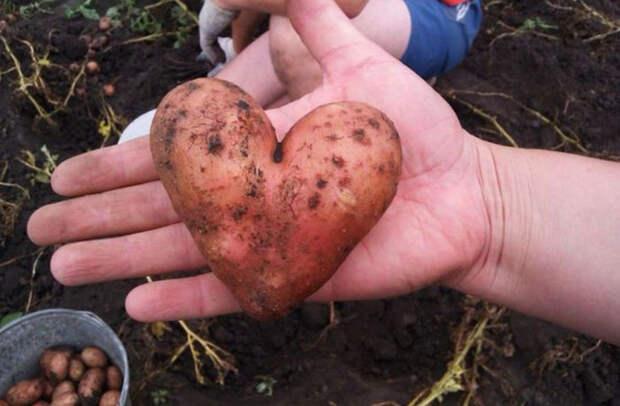 Овощи и фрукты, которые как бы напоминают нам, что у природы отличное чувство юмора