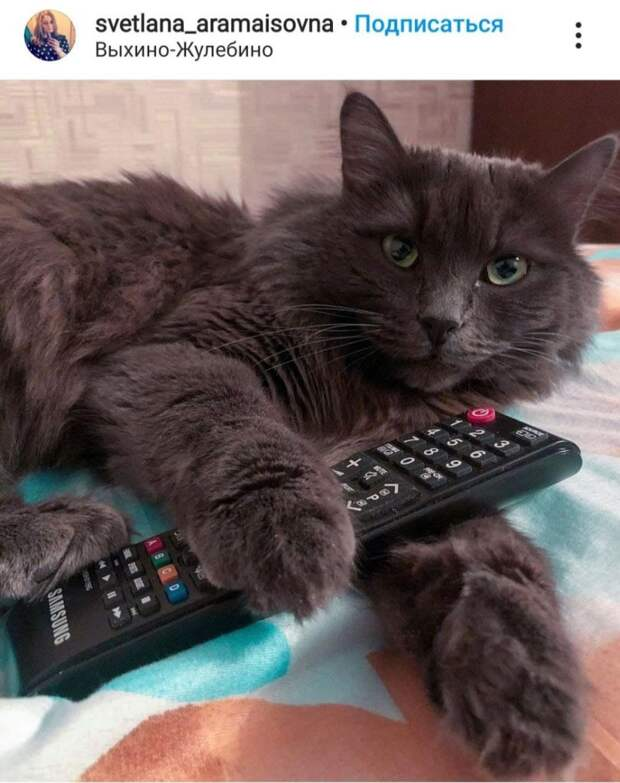 Фото дня: кто в доме настоящий хозяин пульта от телевизора?