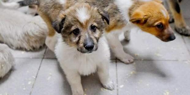Депутат МГД: Онлайн-каталоги помогли обрести новый дом сотням собак и кошек в период пандемии