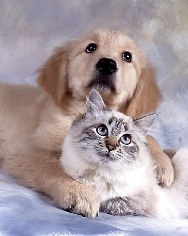 Мама - кошка у Детдома - 3