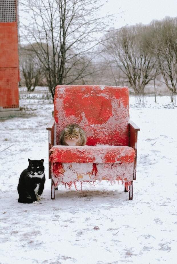 Очень колоритные уличные коты братья наши меньшие, город, кот, кошка, уличные животные, уличные кошки, эстетика