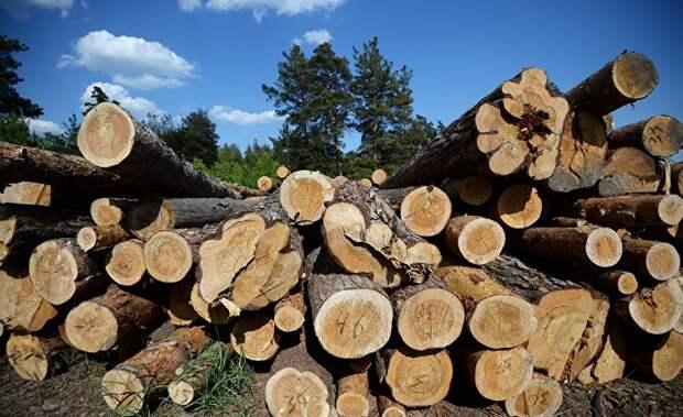 Etelä-Saimaa (Финляндия): запрет на экспорт российской древесины поразил финнов