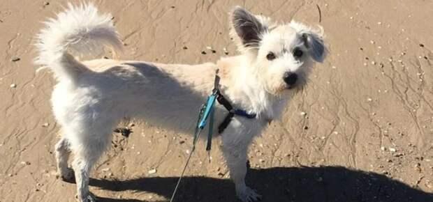 Прохожий парень спас пса, сделав ему искусственное дыхание прямо на пляже