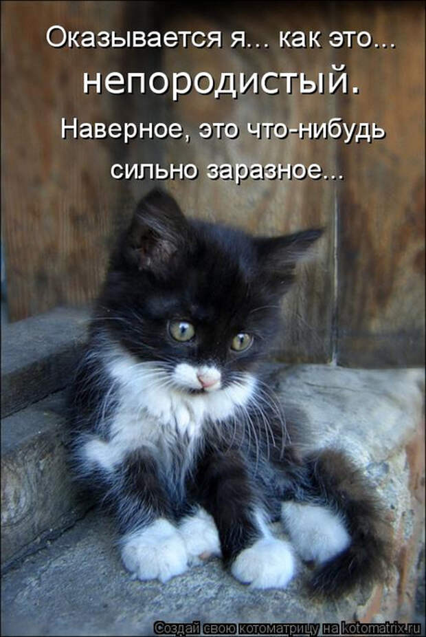 kotomatritsa_lP (468x700, 320Kb)