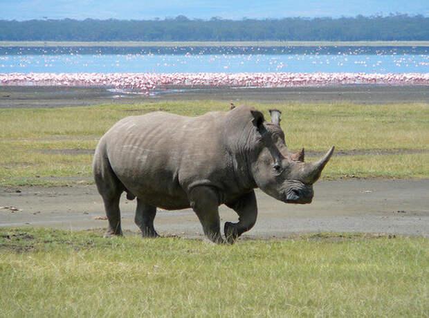 10 самых исчезающих животных в мире