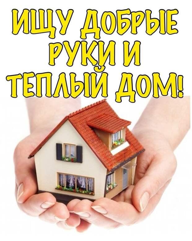 Очень нужна семья, которая даст ей шанс почувствовать любовь и заботу, и вновь стать домашней!