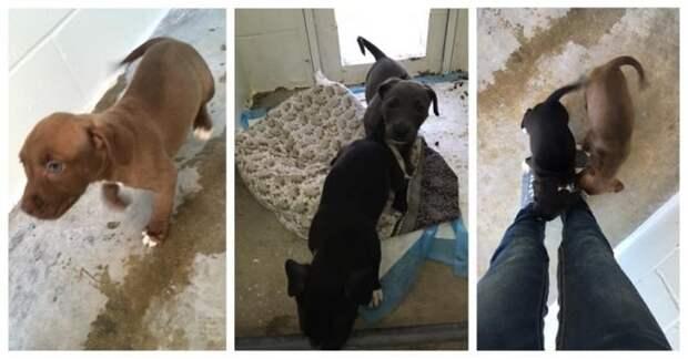 Собака тащила по грязной дороге клетку, в которой сидели четыре щенка