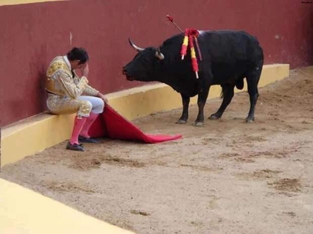 Матадор и бык, изображение №1