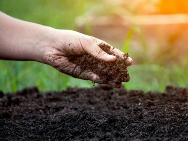 5 вещей, которые вы делаете в огороде зря