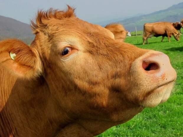 Дмитрий Милин. Молоко без коровы