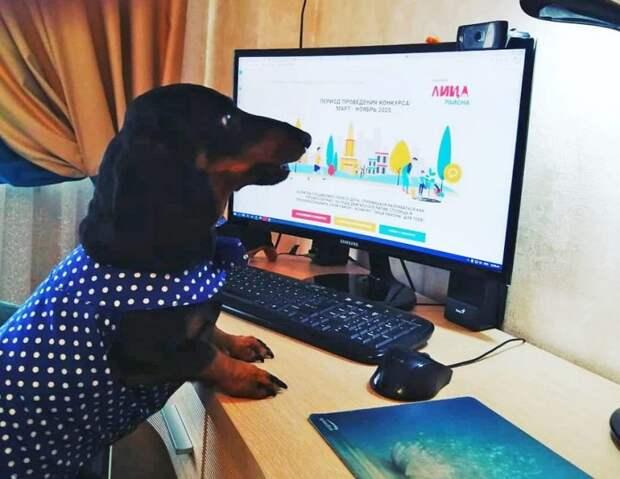 Такса Маруся примет участие в городском конкурсе «Лица района»