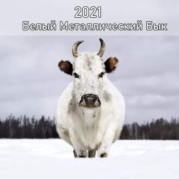 Подготовка к Новому 2021 году