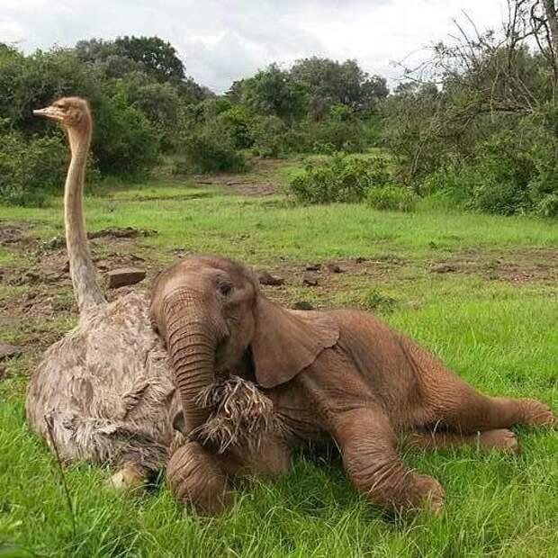 Умиротворённые животные