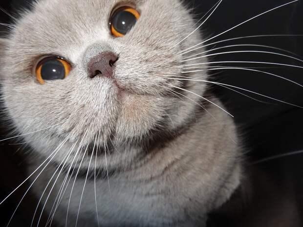 Смотрел влюблёнными глазами и не отходил: неласковый кот после вынужденной разлуки с хозяевами пересмотрел своё поведение