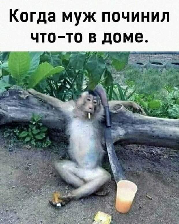 Встретились две подруги:  - Дорогая, ты так потолстела!...