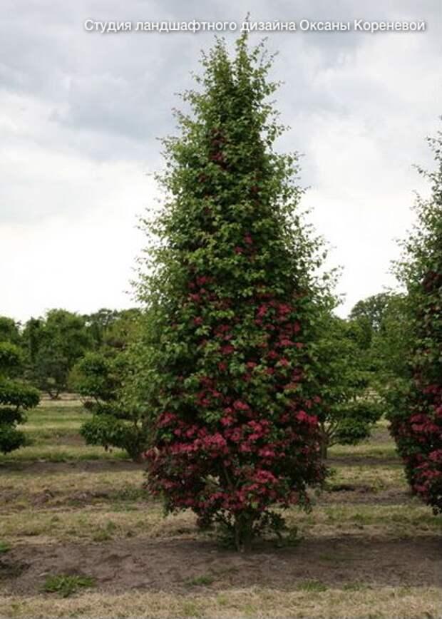 Стрижка кустов и деревьев: Азы выбора растений, алгоритм работ
