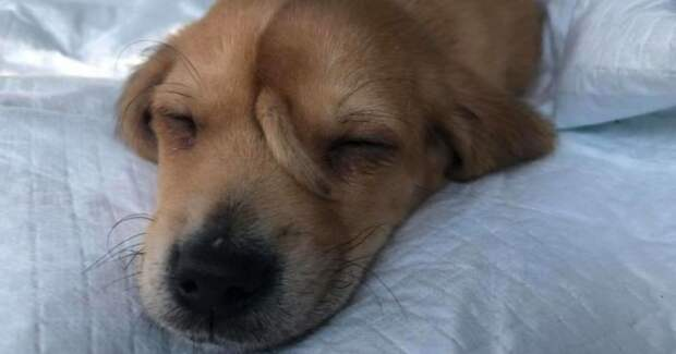 5 очаровательных фото щенка с хвостиком на мордочке