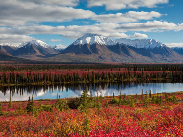 Слово «капитуляция» отсутствует в российском словаре: чем обернется провокация США у Аляски