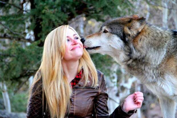 Приют для волков в штате Колорадо