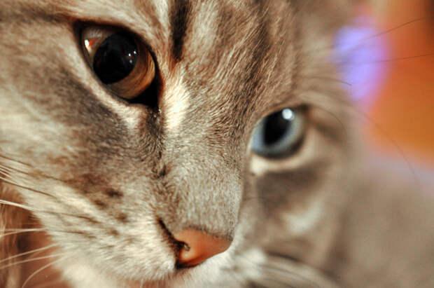 Спустя время подруга поведала мне, что кот не отлипал от нее почти неделю, встречал у подъезда, провожая до работы каждый день